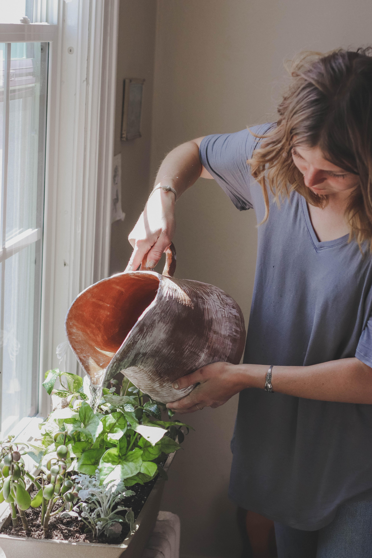 Sådan vander du dine planter korrekt